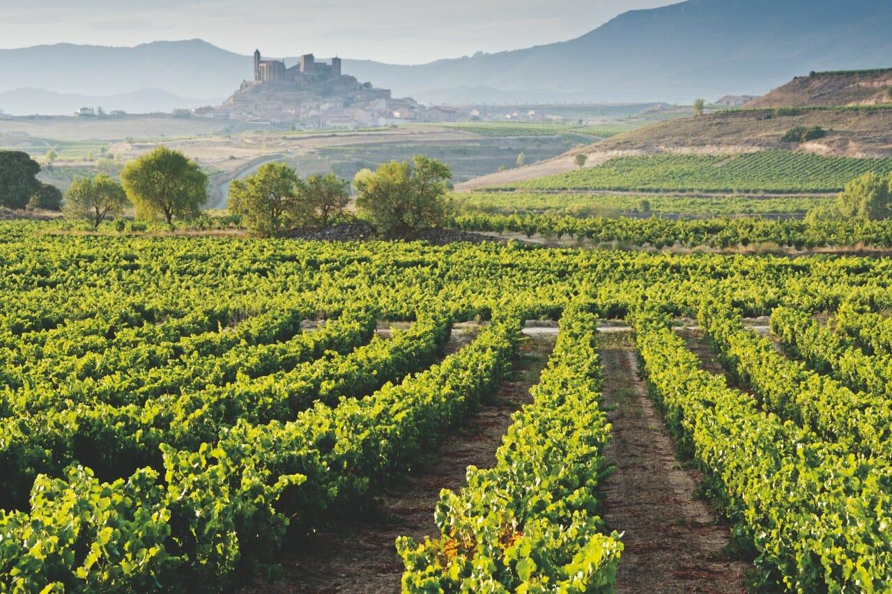 La Rioja Weinreben Spanien