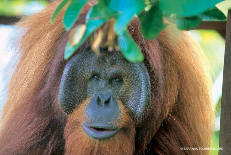 Malaysia – Borneo: Matang Wildlife Center