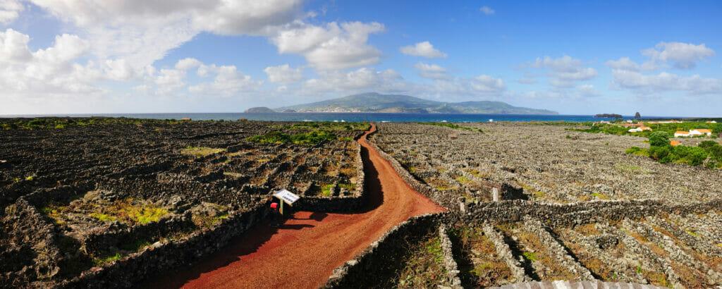 Pico Landscape of Vineyard Culture